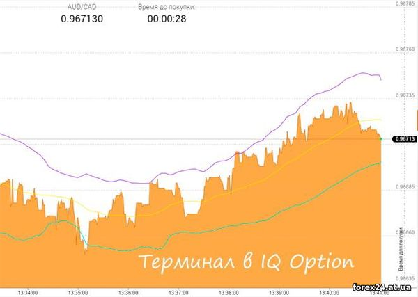 How does the IQ Option terminal